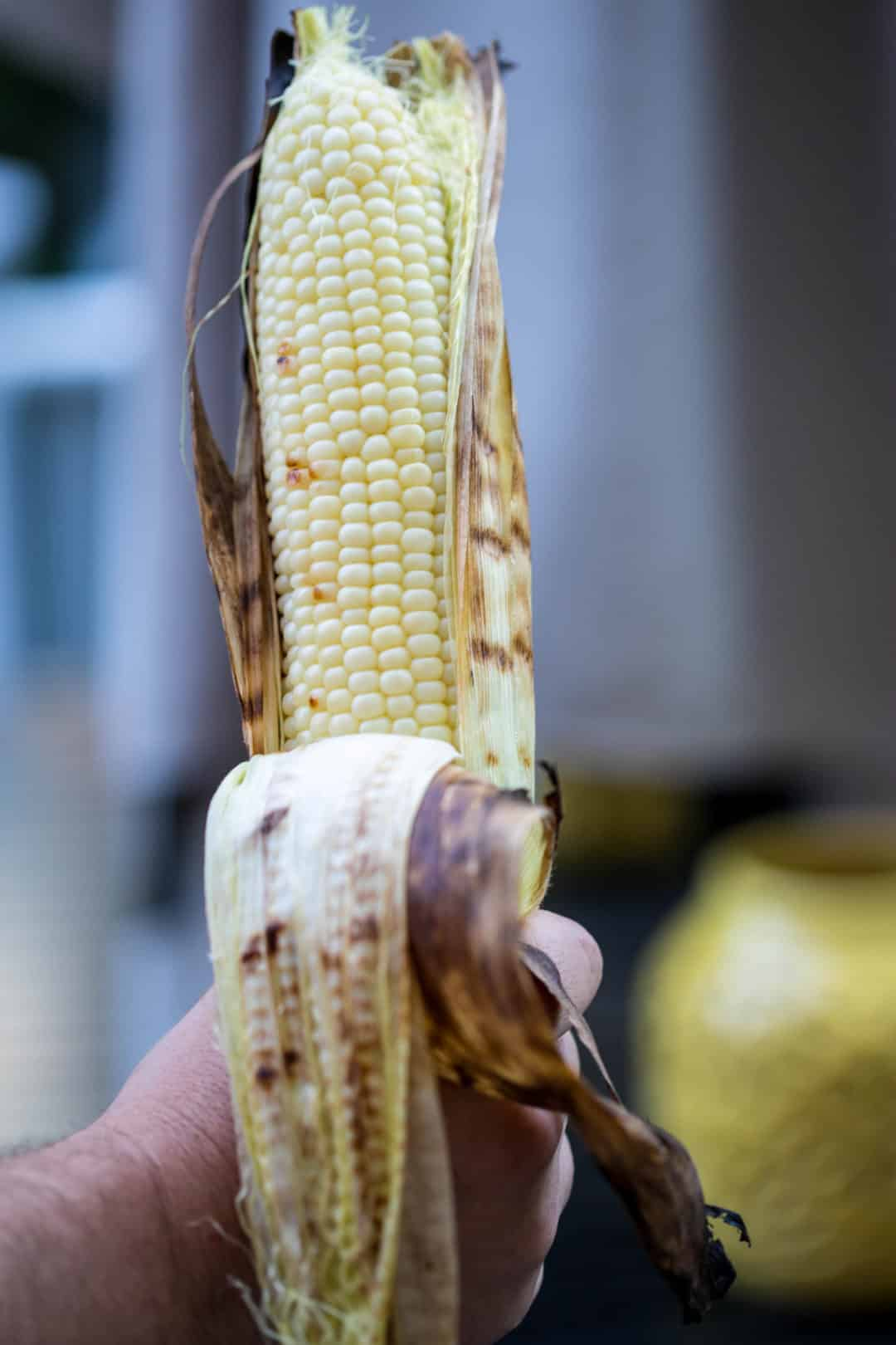 hand holding ear of grilled corn with husk pulled back