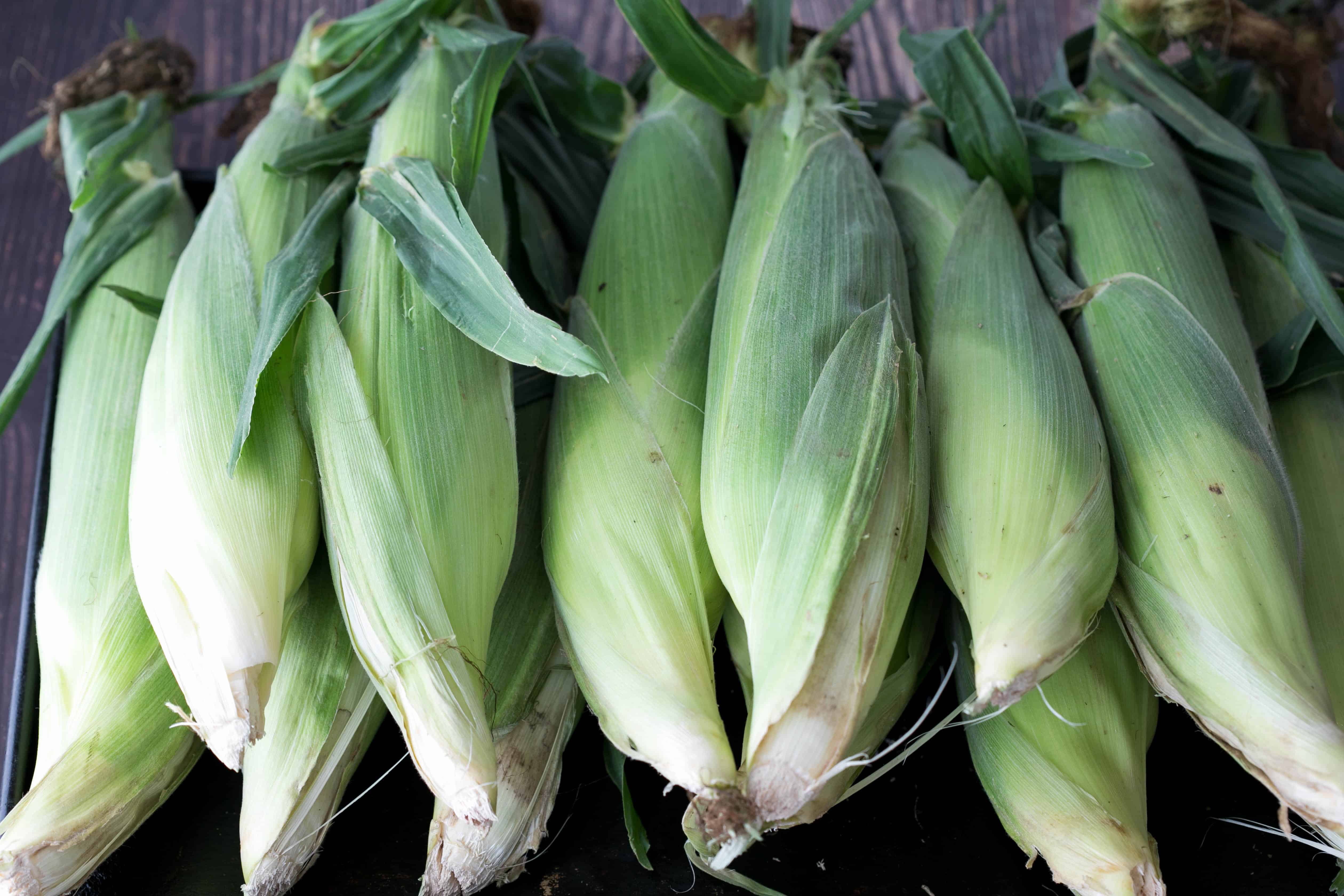 12 ears of fresh corn on the cob
