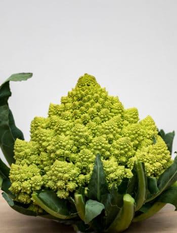 romanesco broccoli head